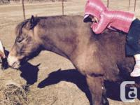 Charlie is a 12 year old welsh type pony gelding. He is