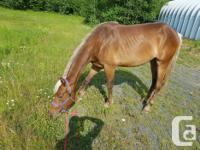 2 year old filly, very fast and agile. Have started