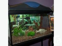 "Complete set-up, even the food. 10 gallon aquarium (10"""