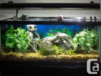 AQUARIUM FOR SALE WITH STAND AND ALL ACCESSORIES FISH