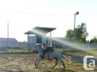 Arabian/QH Mare available for Part Lease in the