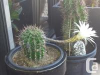 For sale...mature, flowering cactus. These cactus for sale  British Columbia