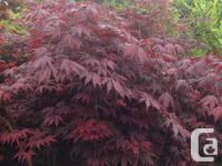 Plants and trees available at competitive prices. Well
