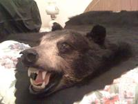 Northern Ontario bear, over 6 feet large from claw to