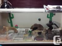 Hand build Lizard tank 4 feet long by 2 feet wide Comes