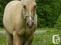Regretfully selling my 4 year old palomino QH mare.