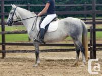Epona demonstrates excellent dressage and jumper
