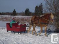 8yr old Hafflinger gelding, going w/j, with some
