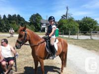 Beautiful 12 year old 13.1 hh welsh arab x pony mare,