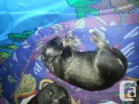 We have 11 beautiful puppies born 12-13 jan 2014.