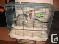 Come with large cage, food, Stands and accessories The