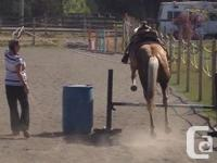 5 year old QH Palamino gelding. 15.2hh and still