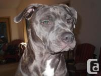 Oceans Pits are looking for a forever home for our