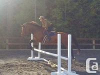 Beautiful, ten year old, 16.3hh Holsteiner mare offered