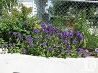 Annual bedding plant sale on now Sat.May 9 .12-5 pm for sale  Saskatchewan