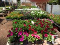 "Baskets $12.00 4""pot Strawberry plants 4pack Begonias,"