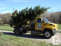 We have many Spruce trees to chose from both Colorado