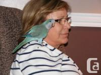 I have a blue quake and a lovebird available for sale,