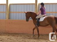 Royale Equestrian Centre rarely has room available for