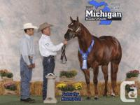 Beautiful 2005 reg AQHA gelding for sale or trade.