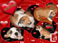 They need their forever home. Only 2 girls left and the