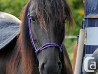 Registered Canadian mare for sale. Trained western .