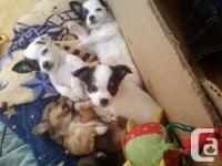 I have 4 Puppies. 1 male and 3females. various colors