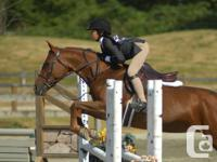 Competitive carded large pony for sale, champion at
