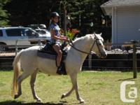 For lease 17 year old Connemara pony mare, 14 hands.