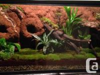 I create custom Reptile vivariums and fish tanks.