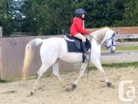 Delbrook Equine Services Offering Boarding, Breeding,
