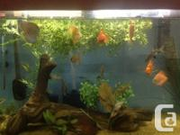 Moving, so need to find another home for my fishes by