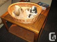 Dog figurines $20.00 each Lhaso Apso& Cocker Spaniel