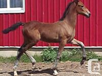 Janita TW is sired by the authorized stallion Gelviro.