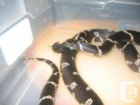 I am looking for a good home for my eastern king snake