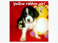 We have been breeding CKC REG. English Springer