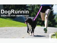 At DogRunnin we provide the highest standard of care