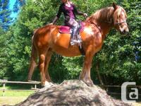 I am a hard working, reliable horsey girl who is