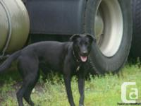 I have a female lab mix to gve away to good home she