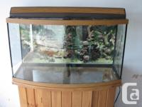40-gallon fish tank with
