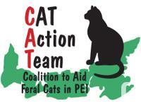 The Pet cat Activity Team provides feline meals to