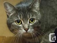 Name Your Adoption Cost - Shy Feline Degree 3 - Tani is