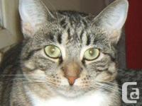All set for love! Reluctant Pet cat - Level 3 Jannike