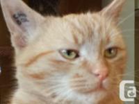 Cheddar - delciously as well as light caring. Cheddar
