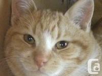 Apricat, the tabby feline! Tabbies are so one-of-a-kind