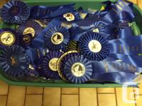Free horse show ribbons, hundreds of 1st place and