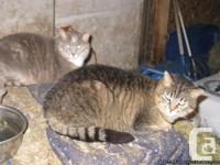 Free barn cats both females as well they are spayed. It