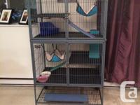 My room mate and i are looking to sell our two ferrets,