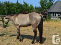Xena is a 3 year old grulla filly by Misty Mount N