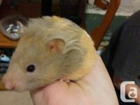 I have a hamster very friendly and loves being held. He